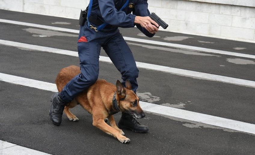 conduttore-cane-antiesplosivo